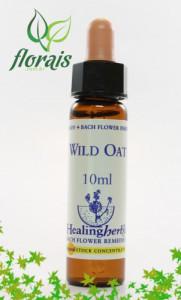 wild_oat_10_ml