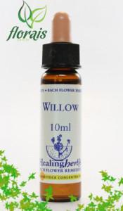 willow_10_ml